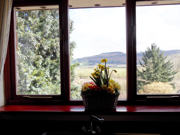 Kitchen with Flowers and View