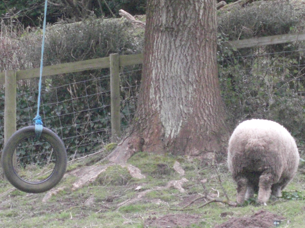 Tyre on Swing and Sheep